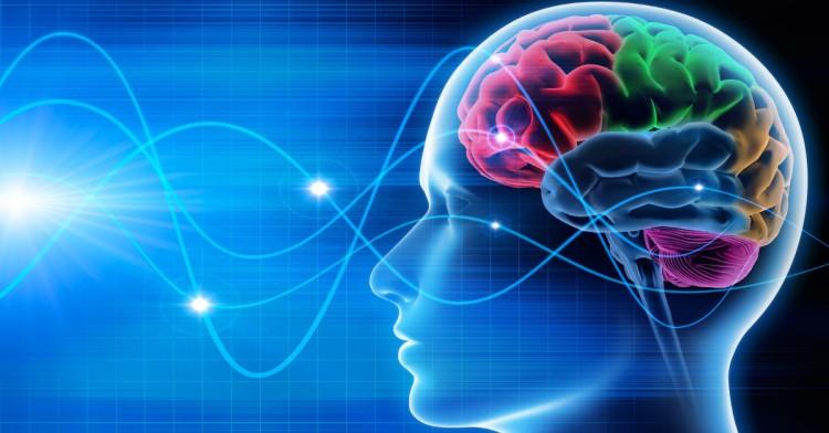 Diplomado en Neurociencias Aplicadas a la Gestión y la Economía  2019
