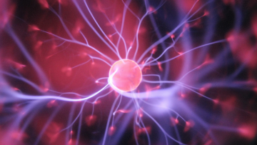 Diplomado en Neurociencias | Inscripciones Abiertas